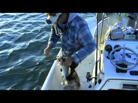 Florida Fishing Charters With Captain Mark Dravo
