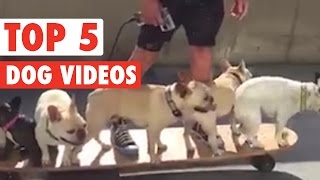 Ridiculously Adorable Dog Videos of the Week 2016