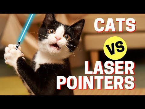 🔴 Most Epic Cat Fails - Funny Cats vs Laser Pointers Compilation