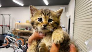 見てるだけで癒される保護した子猫