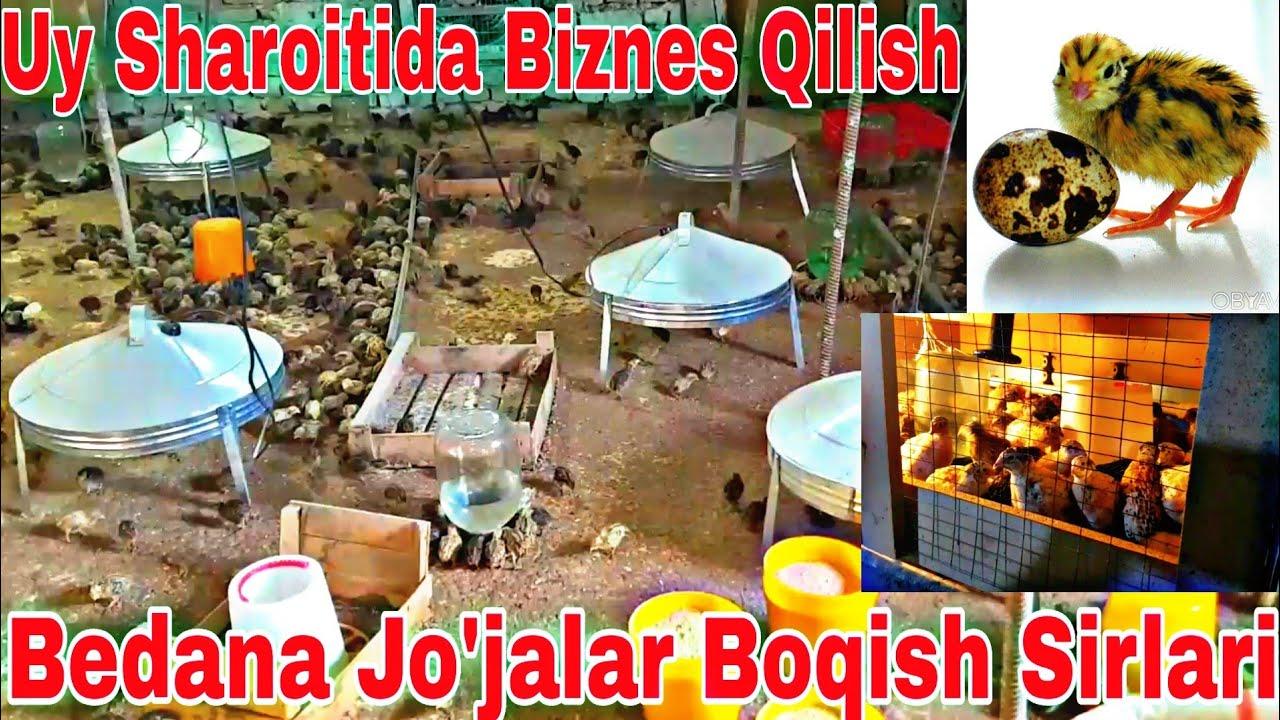 UY SHAROITIDA BEDANA JO'JALARI QANDAY BOQILADI MyTub.uz