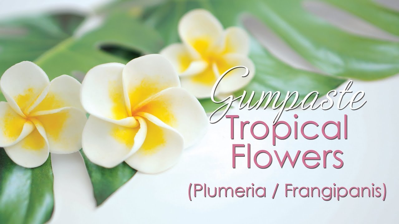 Gumpaste Plumeria Frangipanis Tropical Flower Tutorial Youtube
