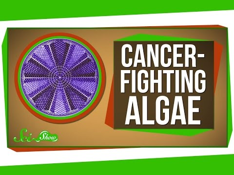 Genetically Engineered Cancer-Fighting Algae