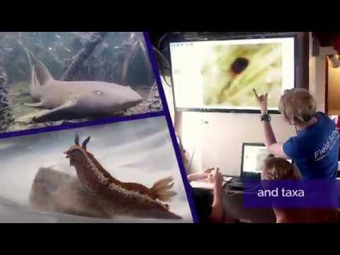 Tropical Marine Biology and Ecology Course