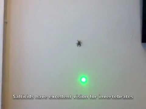 laser spider youtube