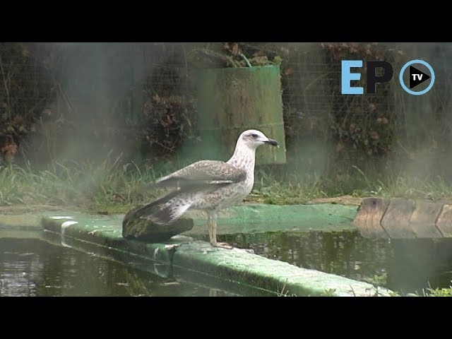 Los cuidados del Centro de Recuperación de Fauna Silvestre