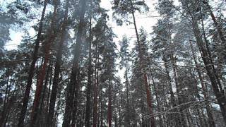 Relaxing nature scenes & chinese instrumental music - In The Forest In Winter Season [Part VII]