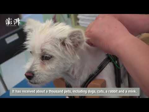 Traditional Chinese Medicine for animals? Acupuncture for pe
