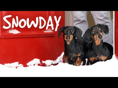 Ep 4. The Dogs Get a SNOWDAY!! - Cute Wiener Dog Video Snow Day