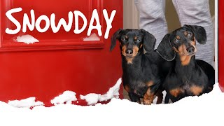 ep-4-the-dogs-get-a-snowday-cute-wiener-dog-video-snow-day