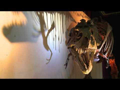 Episode 2: SUE - A Lovelorn T. rex