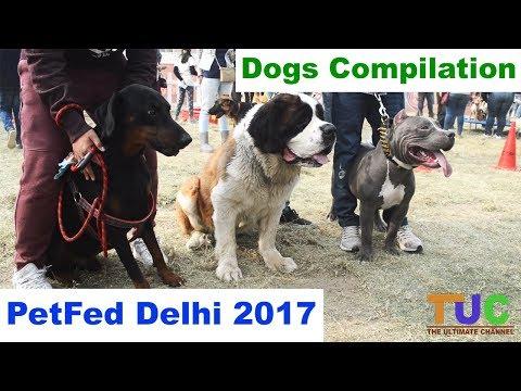 PetFed Dog Show Compilation 2017 Delhi - Dog Compilation - The Ultimate Channel