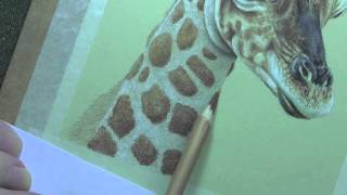 How To Draw Spots on a Baby Giraffe
