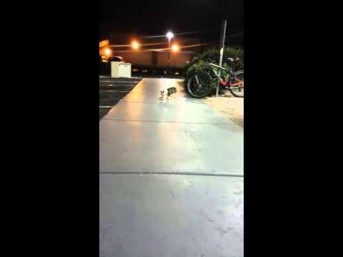 Feeding a homeless chihuahua