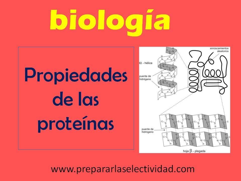 Puente de hidrogeno protein as para bajar de peso
