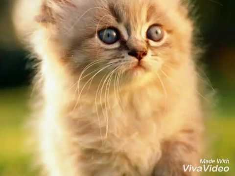 Images of cute kittens and puppies! / cat lover