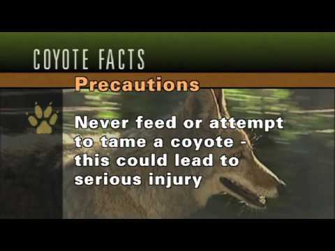 Public Safety - Coyotes In California