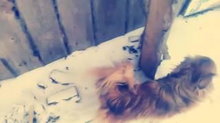 Дворовые приключения моей собаки Чапы у бабушки.