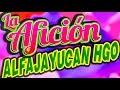 Video de Alfajayucan