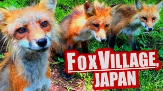 Fox Village, Japan: Cutest Place on Earth