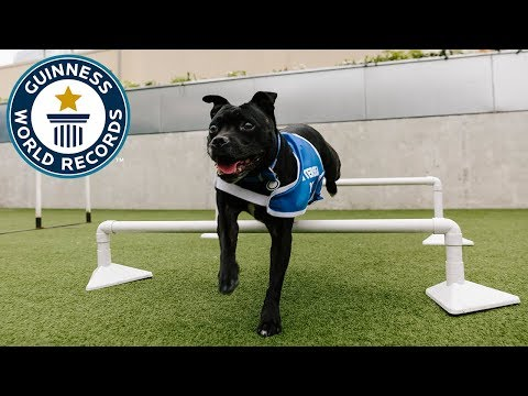A day out at Battersea Dogs and Cats Home – Guinness World Records