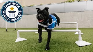 A day out at Battersea Dogs and Cats Home - Guinness World Records
