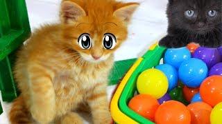 ЧТО БУДЕТ ЕСЛИ ДАТЬ ШАРИКИ КОТЕНКУ. Приколы с котами и игры кота Макса.