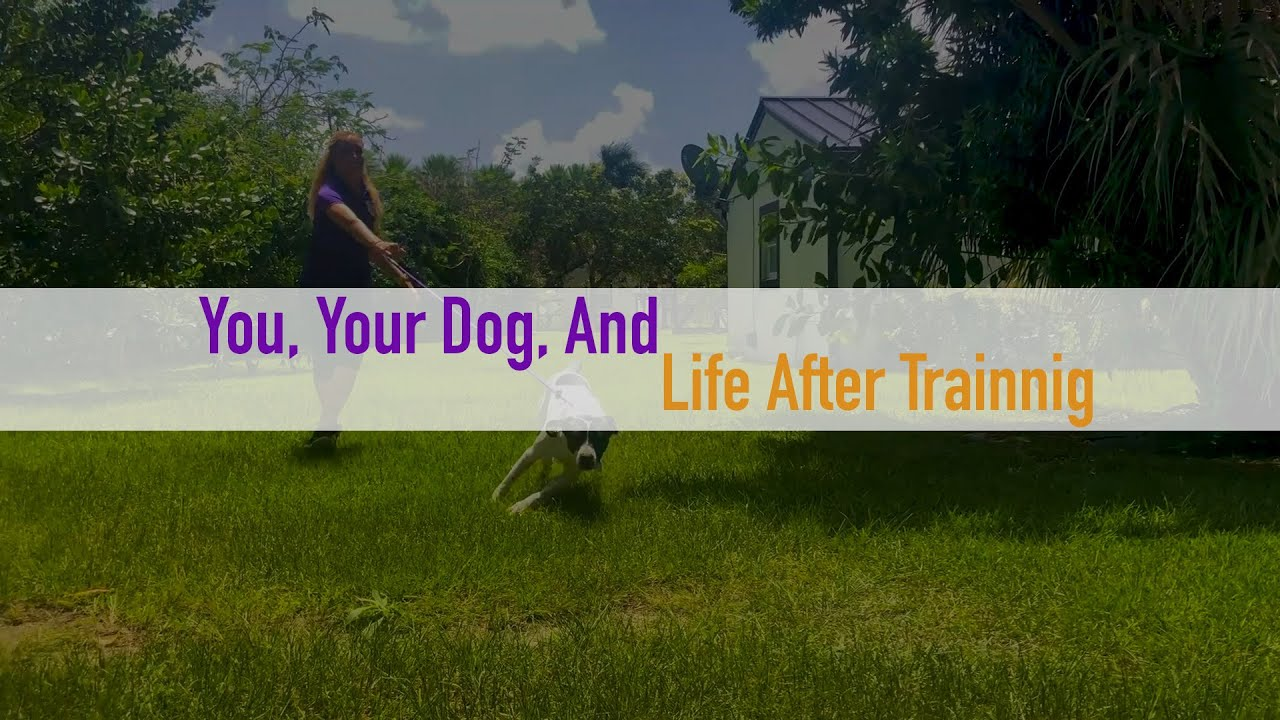 You, your dog and your life after training.