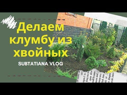 Клумбы из хвойных растений своими руками фото