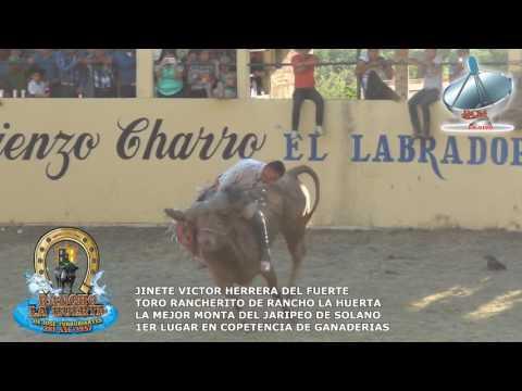 jaripeo de solano victor herrera vs toro rancherito de rancho la huerta