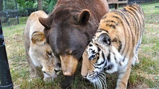 25 Unlikely Animal Friendships That Are Just Too Adorable (Ft. Epic Wildlife)