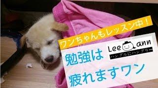 【ハングル講座特集編】ワンちゃんも韓国語勉強中!?