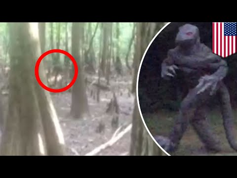 Lizardmen warning: South Carolina issues official advisory regarding lizardman sightings - TomoNews