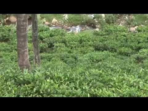 A Fragile Treasure- Nilgiri Biosphere Reserve