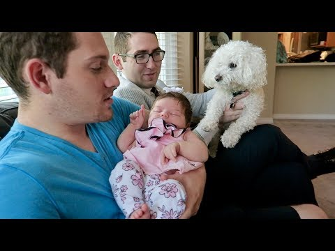 MY DOG GETS JEALOUS MEETING A BABY FOR THE FIRST TIME!