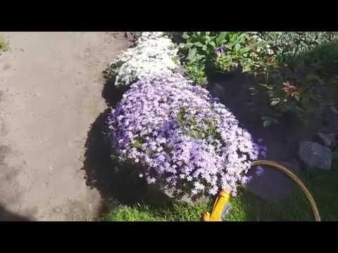Ландшафтный дизайн, двор 6 соток весной, идеи дизайна