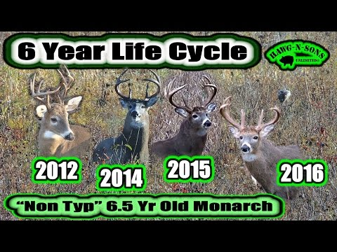 DEER HUNTING 2016: 6 Year Whitetail Life Cycle Video Of Mature Buck Non Typical