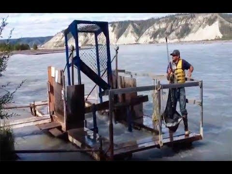 Wilderers Traum - Lachsfischen