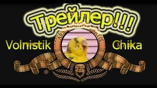Трейлер канала Volnistik Chica!!!! #Волнистый попугай ❤ #Птицы ❤ Смешное видео