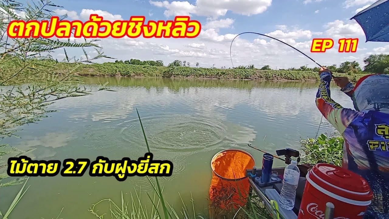 ตกปลาคลองธรรมชาติชิงหลิว EP 111 ไม้ตาย ระยะ 2.7 กับฝูงยี่สก