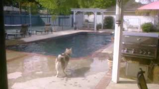 Earthquake, Easter, California, Los Angeles, dogs react to pool, shot on Palm Pre