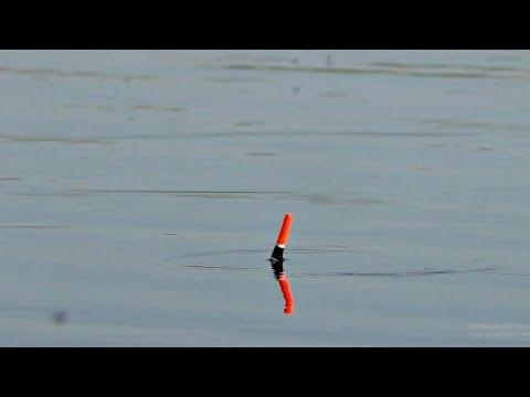 Ловля на маховую удочку в мае. Рыбалка весной на поплавок.