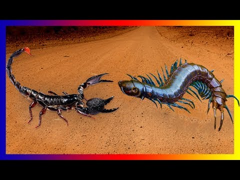 Centipede Vs. Scorpion | Unexpected Results With The King Of Centipede
