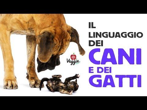 Il linguaggio dei cani e dei gatti mariarosa gavardi for Youtube cani e gatti