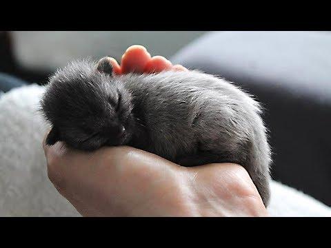 Sie dachten, sie hätten ein graues Kätzchen gerettet, aber bald waren sie fassungslos!
