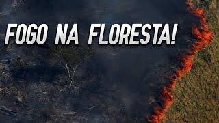 A Amazônia Está Pegando Fogo