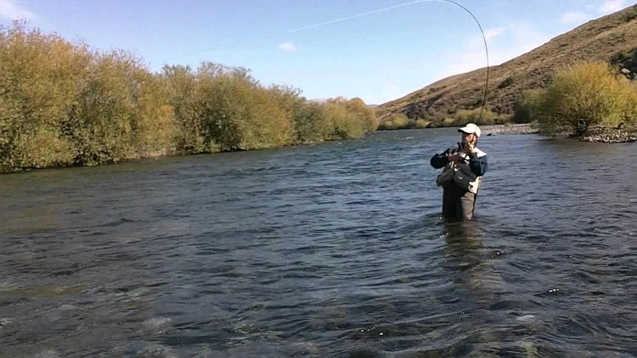 Fly fishing chimehuin river brown trout junin de los for Fly fishing argentina
