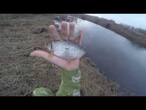 Ловля плотвы весной  2020  на удочку, видео Rubahil.ru