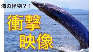 【閲覧注意 激ヤバUMA】次々と目撃されている海の超巨大生物・シーサーペントの映像がヤバすぎて目を疑う・・・ネッシー・モーガウルなどなど海の巨大生物大特集!!!