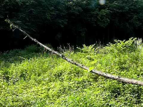 P1060976.MOV Swinging tree trunk in Pilis